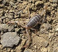 Name: SCORPION.jpg