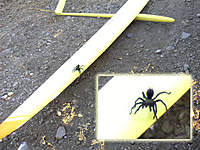 Name: tarantula.jpg