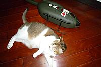 Name: ec-145 cat.jpg