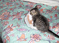 Name: ROZ_1ST_ NIGHTa.jpg