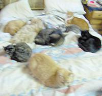 Name: GROUP_10_11.jpg Views: 78 Size: 120.3 KB Description: Main cat bed.