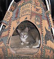 Name: DOBE080910.jpg Views: 67 Size: 263.4 KB Description: Cat tee pee