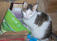 Name: EGYPT_4.jpg