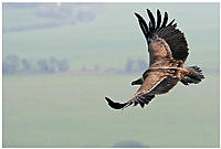 Name: Vulture_top_surface.jpg