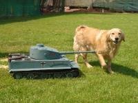 Tiger Tank Name DSC02890 Views 643 Size 1267 KB Description Dog And