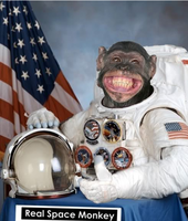 Name: Space monkey.png Views: 13 Size: 532.0 KB Description: