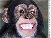 Name: th_funny_monkey1.jpg Views: 45 Size: 9.4 KB Description: