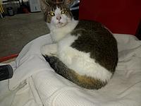 Name: Shop cat.jpg Views: 35 Size: 309.5 KB Description: