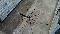 Name: Umbrella Skeleton.JPG Views: 6 Size: 579.1 KB Description: Most of the spokes are indeed bent, and you can see the supporting spokes (that I asked about earlier, mentioning I could get pics if someone needed me to) nearest the handle are also bent. It's been in my fam. for years, so it sort of makes sense.
