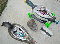 Name: 468678_127712637358614_347090282_o.jpg