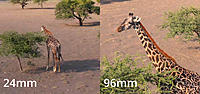 Name: mavic zoom.jpg Views: 23 Size: 145.6 KB Description: