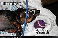 Name: funny-dog-pictures-dog-is-about-to-kill-your-internet-connection.jpg Views: 81 Size: 36.9 KB Description: