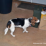 Daisy Mae inspects some boxes.