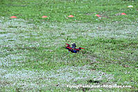 Name: DSC_0086RCGroups Drone Race.jpg
