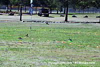 Name: DSC_0111RCGroups Drone Race.jpg