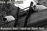 Name: cats.jpg Views: 267 Size: 29.1 KB Description: