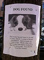 Name: Dog_Found.jpg