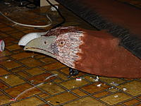 Name: DSCN0296.jpg