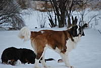 Name: ice storm 09 005.jpg
