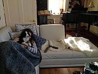 Name: IMG_0646.jpg Views: 133 Size: 183.8 KB Description: Lucky dog!