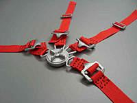 Name: Gurtzeug 1zu3 - 1zu3,5 rot Beispiel 2.jpg Views: 73 Size: 18.7 KB Description: