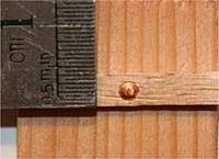 Name: nail and rove test.jpg