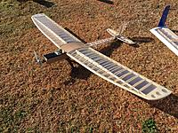 Name: buzz w sparrow.JPG