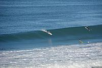 Name: Aves11202014_05.jpg