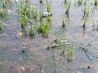 Name: 20130721_101603.jpg