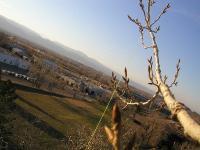 Name: treetwine.jpg Views: 622 Size: 41.3 KB Description: