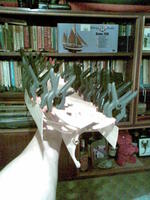 Name: Image063.jpg Views: 312 Size: 173.6 KB Description: i usualy work with plywood instead of strips