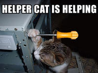 Name: helpercat.jpg
