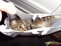 Name: Cat in a bag 002.jpg