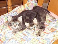 Name: New kittens.jpg Views: 67 Size: 48.0 KB Description: