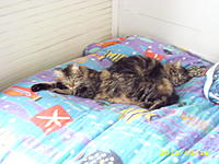 Name: window kittys 008.jpg
