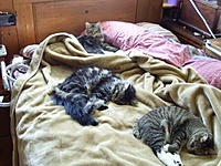 Name: Cats on bed 008.jpg